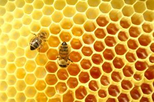 Honey Bees Charlotte North Carolina Divorce Family Law Alimony Child Support Attorney Lawyer.jpg