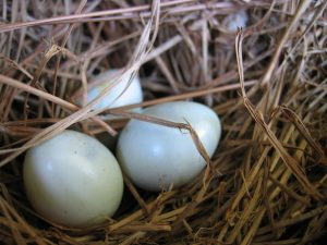 Eggs in a nest Charlotte Divorce Lawyer Mecklenburg Family Law Attorney