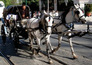 Horse-drawn-carriage-Charlotte-Divorce-Lawyer-300x211