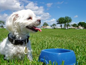 dog-with-bowl-Charlotte-Monroe-Lake-Norman-Pet-Custody-Lawyers-300x225