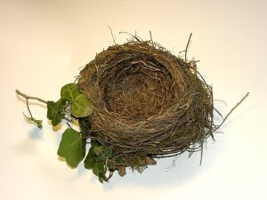blackbirds-nest-Charlotte-Monroe-Lake-Norman-Child-Custody-Lawyers-300x225
