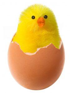 chicken-in-broken-egg-Charlotte-Lake-Norman-Monroe-Egg-Donor-attorney-225x300